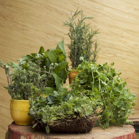 Boticario, Aromáticas, Condimentarias, Deshidratados y Sales